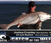 Costa Catch winner 6-7-12