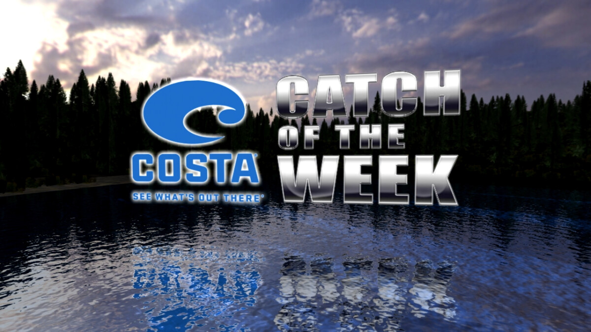 Costa Catch of the Week